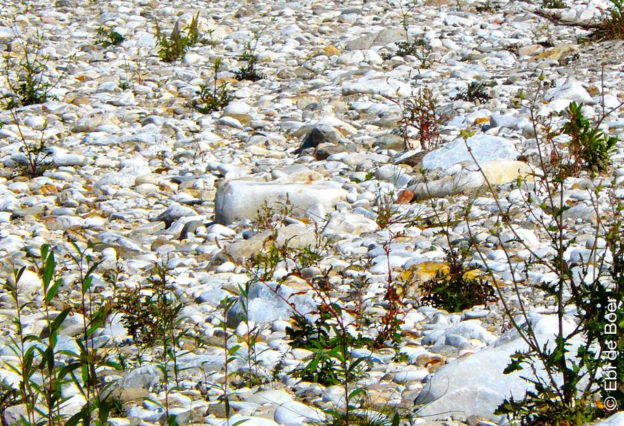 ©Ebi-de-Boer-Carrara-marble