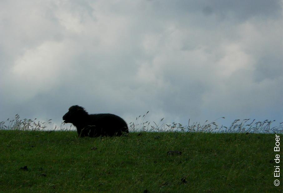 ©Ebi-de-Boer-Nordsee-Poesie