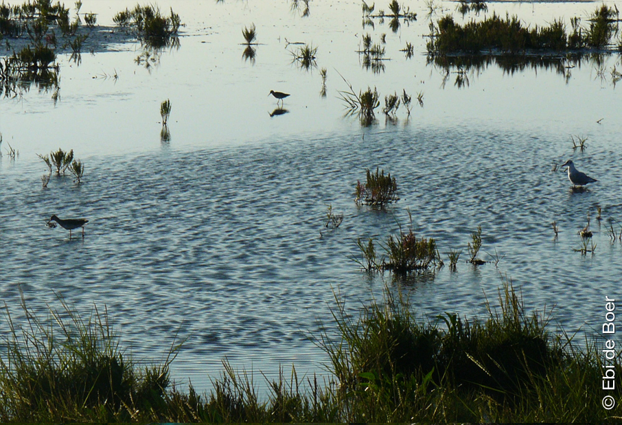 ©Ebi-de-Boer-Ostfriesland-Natur-Watt
