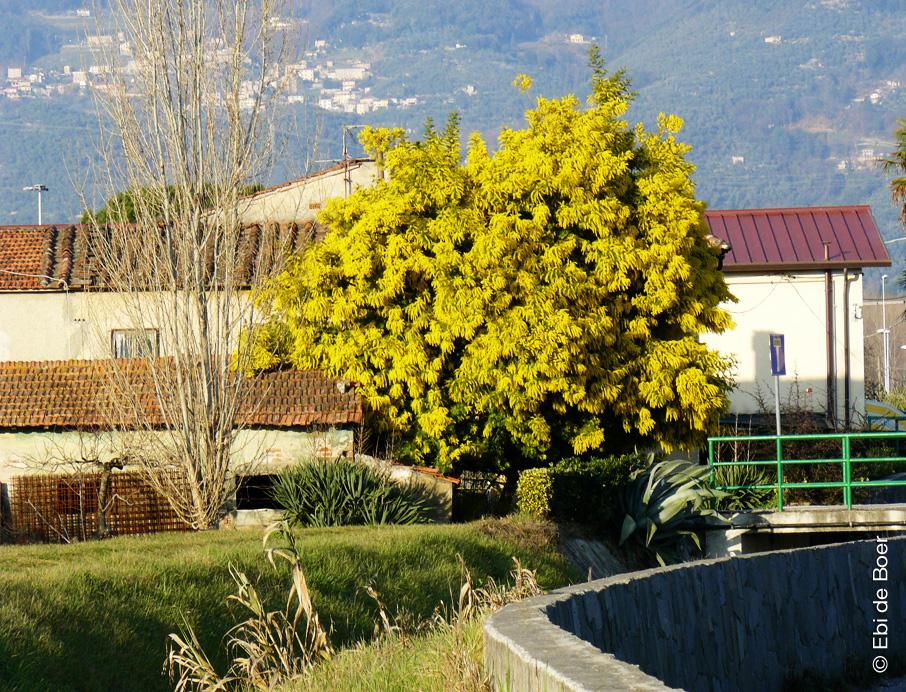 Ebi de Boer-Pietrasanta-nature-tuscany
