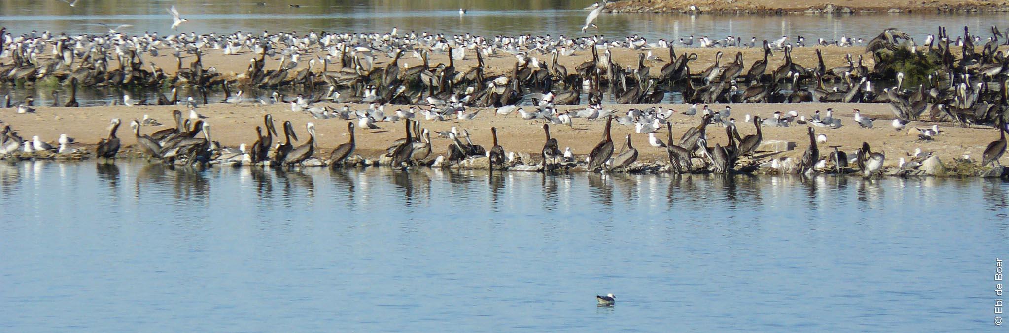©Ebi-de-Boer-Kalifornien-birdwatching-photographie