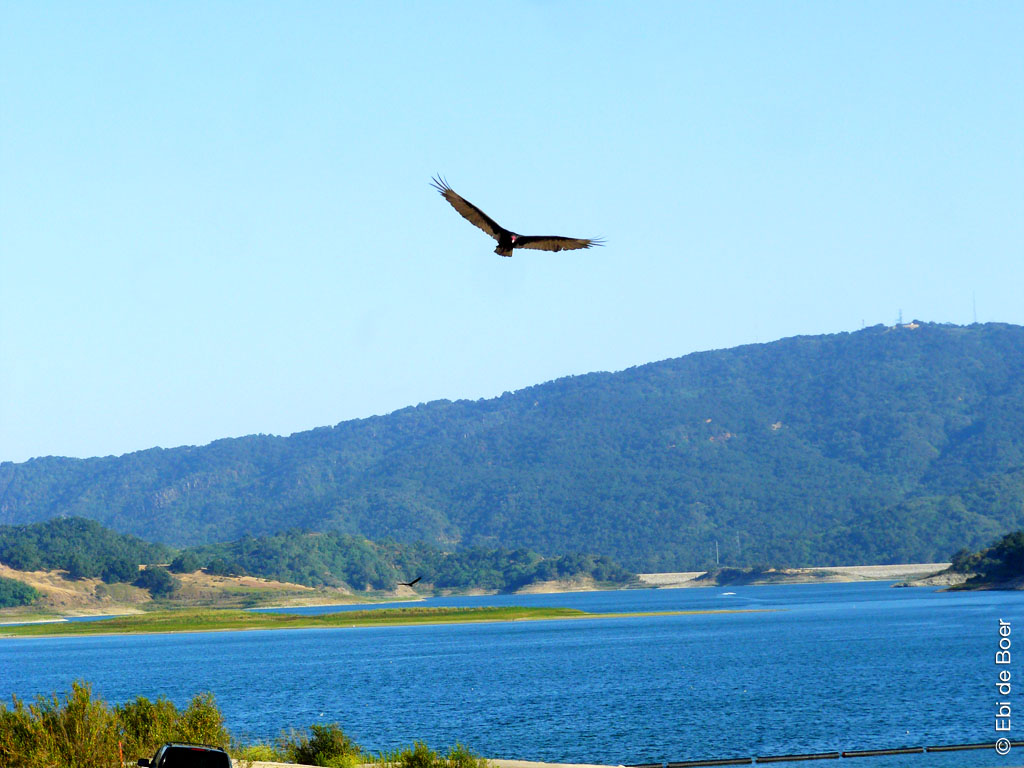 ©Ebi-de-Boer-Kalifornien-natur-photographie