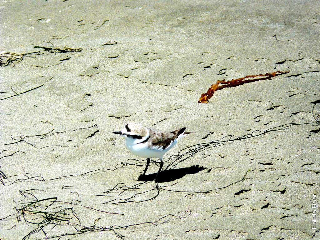©Ebi-de-Boer-Kalifornien-vogel-photographie