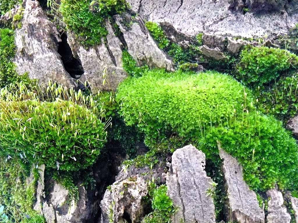 ©Ebi-de-Boer-Pietrasanta-Natur-Biotop- Photographie