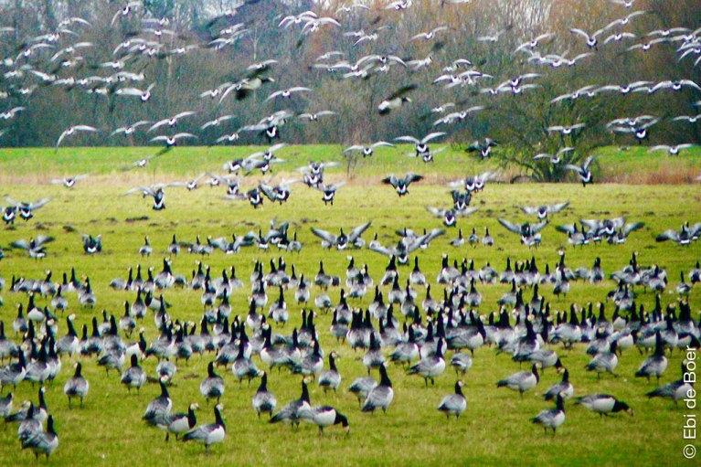 Ebi-de-boer-kunst-vogel